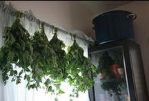 drying herbs / by Latisha Guthrie