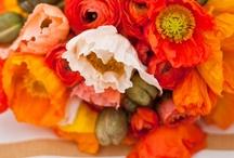FIELDS, FLOWERS, TREES / Nature's beautiful bounty / by Arlynn Dwyer