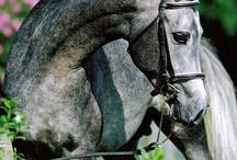 horses / by georgia weeks