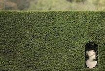 Jardins da Babilonia / by Andreia Martins