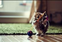 Le chat dans toute sa splendeur / by Marie Leblanc