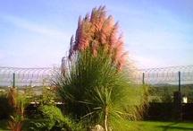 bitki - plant / by Emine Erturk
