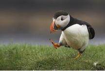 Ain't you a pretty bird / by Deborah Olsthoorn