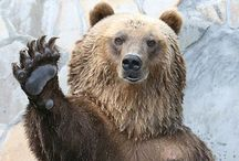 Sic'em Bears! / Baylor / by Lisa S Payne