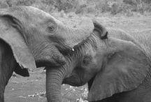 International Animals / by International Academic Programs