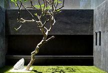 garden inspiration / by Jane Michell