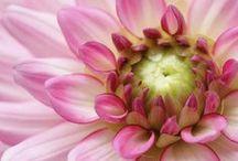 Flores diversas ✿✿✿ / by ღ ೋღ Rose Mary Motta Prado
