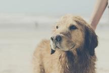 Puppy Love / by Robin Johnson