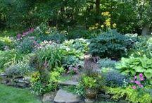 Gardening / by Kellyann Walker