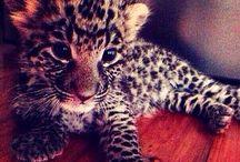 Animals . / Cutie Patooties :D / by Destiny Christine