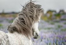 Horses / by Isabella Donohoe