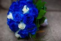 All things Blue! / by Melanie Guite
