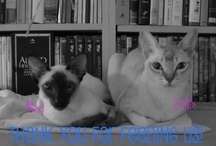 """felix & nikki's pinboard / images d'animaux *** dedicated to nikki, a little siamese who brought so much love to me and his brother, felix. *** Hosea 2:18 """"And for them I shall certainly conclude a covenant in that day in connection with the wild beast of the field and with the flying creature of the heavens and the creeping thing of the ground, and the bow and the sword and war I shall break out of the land, and I will make them lie down in security."""" / by Picasso Summer"""