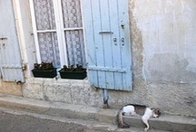 chats français / chats et chatons en france...kitties living the good life in la belle France. / by Picasso Summer