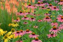 Plant Match Harmony #plantingplan / Gorgeous plant pairings, named plants that have harmonious colors / by Ilona's Garden