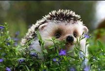 In The Garden #wildlife / by Ilona's Garden