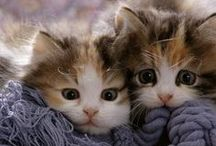 Adorable, too cute cats and kittens / Adorable, too cute cats and kittens that will melt your heart and make you smile just from their cute power! / by Cali Chic Patterns