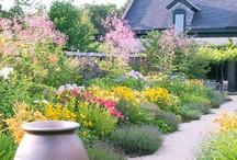 Garden Inspiration / by Cindy Carter