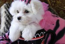 """Dogs / Photos of all breeds of dogs. If you would like an invite to pin to this board just comment """"add me"""" on one of my pins (Brenda Woods).  / by Brenda Woods"""