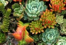 Succulents! / by Engledow Group
