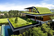 Green Roofs / by Engledow Group
