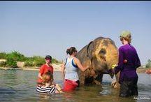 Globe Aware Volunteer Vacations  / Have Fun Help People / by Globe Aware
