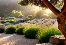 garden/outdoor / by erinne elise
