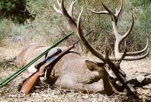Hunting Safari In Portugal / Hunting in Portugal, Red Deer Hunting in Portugal, Wild Boar Hunting in Portugal, Wing-shooting in Portugal / by Shakari Connection