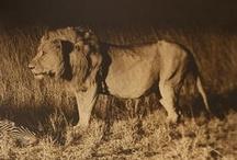 Vintage Hunting Safari Photographs / by Shakari Connection