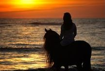 ◄ Silhouettes ► / by Miss Perry