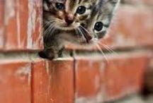 Cute animals / animals / by Phoebe Baggott