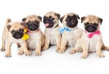 we love pugs / by the essentials inside