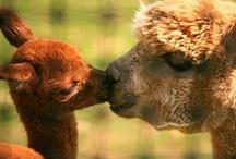 Animals** / by Cassandra Heredia