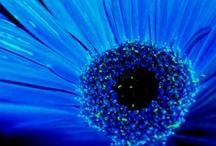 Blue Fire / by Boston02128