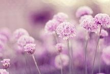 a color purple. / by Claire Zinnecker