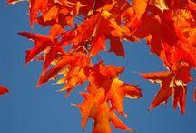 Happy Fall Y'all / My favorite season. / by Corey Miley