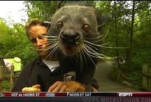 Bearcats abound / Lots and lots of Bearcats / by Willamette University Bearcats