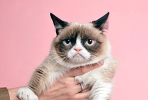 Grumpy Cat / Grumpy Cat.....cute.  I'm giving him his own folder. / by Deb S