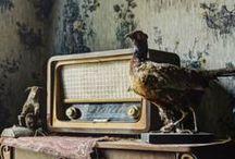 Decadent Decay / by Kathryn Cottam