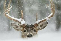 - oh my deers - / by Laura Suominen
