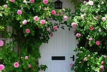 Rose Gardens / by Trisha Albus