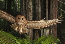 042 ★☽ Oh Wow: It's An Owl! ★☽ / everything owl / by Nancy King-Badran