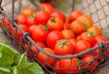 Tomates ♥ / La tomate se marie dans tous nos plats favoris et se décline à l'infini...  Tomates mozzarella, bruschetta, coulis, soupe, tarte, quiche, beignet la tomate se mange sous toutes les formes et toutes les couleurs.  http://www.750g.com/recettes_tomates.htm #tomates #tomatoes #750g #750grammes  / by 750 Grammes