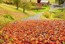 Fall Love / by jlrh121