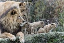 Let's Go To The Zoo / Photos from zoos around the world / by Patricia H
