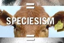 """Spécisme et Antispécisme / Nous avons le choix, pas eux ! Contre toutes les oppressions : selon la race, le genre, la classe sociale, l'espèce ! """"Les animaux sont des êtres sentients"""" - Animals are sentient beings -Traité d'Amsterdam - 1997 / by Hypathie Blogueuse"""