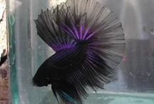 Bonkers for Bettas / by Micki Sowell