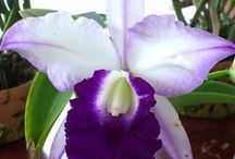 Orchids / by Micki Sowell