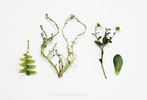 Miles of Light on Etsy / Home and garden, natural and botanical photographic prints.   / by Miles of Light