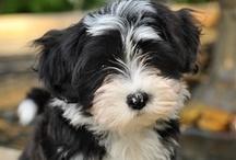 Puppy Love / by Leigh Sasser
